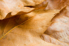 jesień przychodzi zdjęcie stock