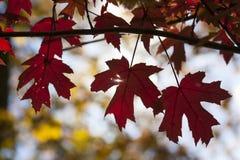 Jesień przyjeżdżał w parkach obrazy royalty free