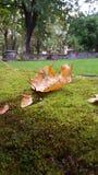jesień puszek spadać ulistnienia krajobrazu gazonu park Zdjęcie Stock