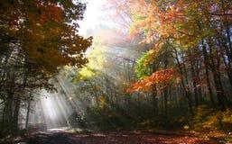 jesień ranek obrazy stock