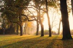 Jesień ranek w parku, Praga, republika czech Obrazy Stock
