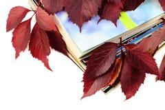 jesień rezerwuje czerwonych liść magazyny Zdjęcie Stock