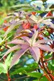 jesień roślina Obrazy Royalty Free
