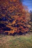 Jesień rocznika sceneria Obraz Stock