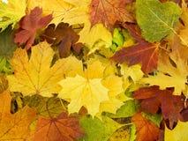 jesień rozsypiska liść fotografia stock