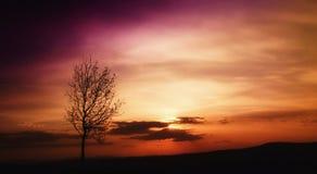 jesień słońce Zdjęcie Stock
