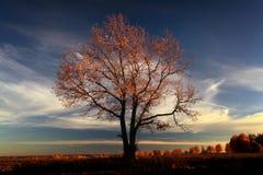 Jesień, samotny dębowy drzewo w polu Fotografia Royalty Free