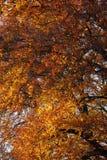jesień scena Zdjęcia Royalty Free