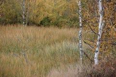 Jesień scena Obrazy Stock