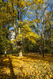 Jesień scena Jesień czas Obraz Royalty Free