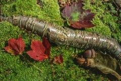 jesień scena podłogowa lasowa Obrazy Stock