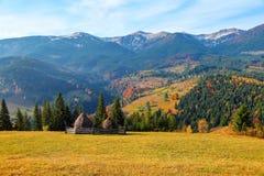 Jesień sceniczny krajobraz z złotymi drzewami, pomarańczowymi krzakami, żółtą trawą i niebieskim niebem, Fotografia Stock