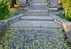 jesień schody fotografia royalty free