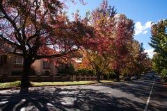 Jesień sezon w Blackheath, NSW Obraz Royalty Free
