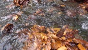 Jesień, siklawy i strumienie, zbiory