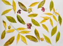 Jesień skład dużo spadać liście na pastelowym tle Odgórny widok Fotografia Royalty Free