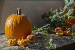 Jesień skład z dużymi i małymi pomarańczowymi baniami, Fotografia Stock