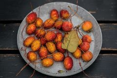 Jesień skład z różnymi baniami, jesień liście, kasztany, rowan jagody, jesieni żniwa pojęcie Obraz Royalty Free