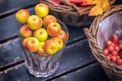 Jesień skład z różnymi baniami, jesień liście, kasztany, rowan jagody, jesieni żniwa pojęcie Zdjęcia Stock