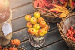 Jesień skład z różnymi baniami, jesień liście, kasztany, rowan jagody, jesieni żniwa pojęcie Zdjęcie Royalty Free