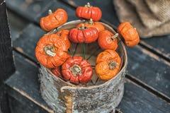 Jesień skład z różnymi baniami, jesień liście, kasztany, rowan jagody, jesieni żniwa pojęcie Obrazy Royalty Free