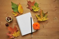 Jesień składu tło Zdjęcie Stock