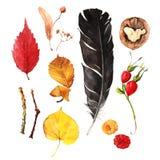 Jesień skarby ilustracji
