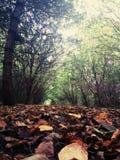 Jesień spacer Obraz Royalty Free