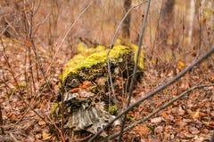 jesień spadać drzewo Na spadać drzewie zielony mech Sezonowy natury tło zdjęcia stock
