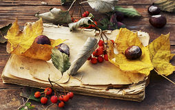 jesień spadać liść Obraz Royalty Free