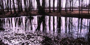 jesień spadać liść odbicia woda obrazy royalty free