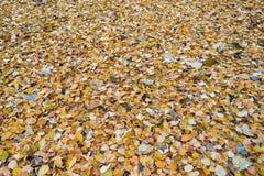 Jesień spadać liście kłamają na ziemi z ciągłym kolorowym dywanem Obrazy Stock