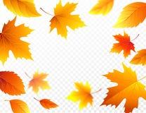 Jesień spada liście na przejrzystym w kratkę tle Jesienny ulistnienie spadku liścia latanie w wiatrowej ruch plamie wektor Fotografia Stock