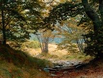 Jesień, spadek, ścieżka prowadzi las polana Uncontaminated natura europejczycy zdjęcia royalty free