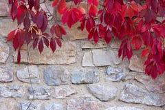 jesień spadek lasowej ścieżki sezon Naturalny piękny tło Zdjęcie Stock