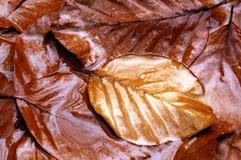 Jesień, spadek liść Zdjęcie Stock