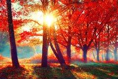 Jesień Spadek natury scena jesienny park