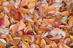 Jesień spadek opuszcza tło Obraz Royalty Free