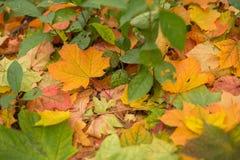 Jesień spadek opuszcza zbliżenie Zdjęcie Royalty Free