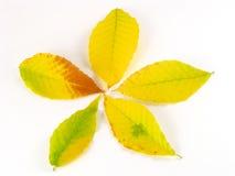 jesień spadek ulistnienia liść opuszczać Listopad Październik Obraz Royalty Free
