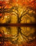 Jesień spadku drzewa refelction