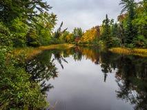 Jesień spadku koloru bagna Bonnechere 2 prowincjonału park Zdjęcia Royalty Free