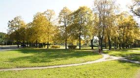 Jesień, spadku krajobraz drzewni kolorowi liść Fotografia Royalty Free