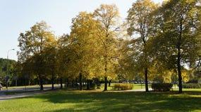 Jesień, spadku krajobraz drzewni kolorowi liść Zdjęcia Stock