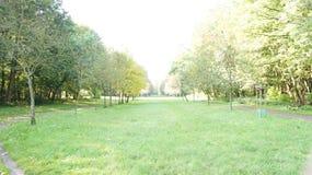 Jesień, spadku krajobraz drzewni kolorowi liść Obrazy Royalty Free