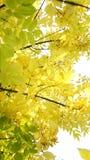 Jesień, spadku krajobraz drzewni kolorowi liść Zdjęcia Royalty Free