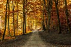 Jesień spadku las z drogą przemian Obraz Royalty Free