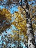 Jesień spadku liści światła słonecznego słońca wschodu słońca drzew roślinności natury drewien lasowy pustkowie wycieczkuje podró Obrazy Stock