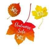 Jesień spadku sprzedaż, poligonalni liście klonowi, dyskontowe etykietki, elementy Sezonowy promocyjny pojęcie nowoczesne projekt Fotografia Royalty Free