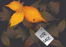 jesień sprzedaż Obrazy Stock